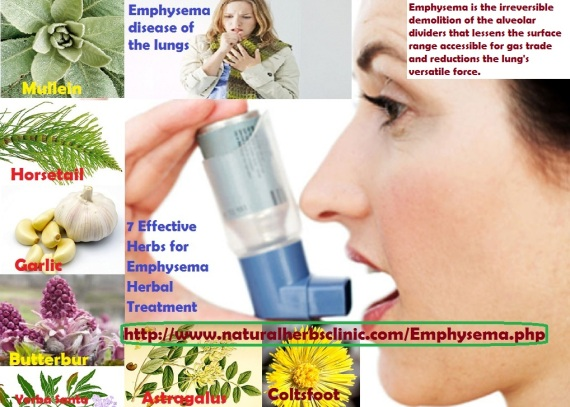 7 Effective Herbs for Emphysema Herbal Treatment